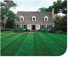 Green Lawns with Green Methods