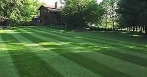 Lawn PH Levels
