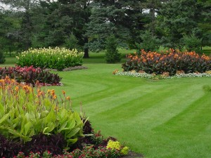 Lawn Care and Maintenance Services