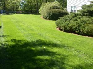 Lawn Care Maintenance Service