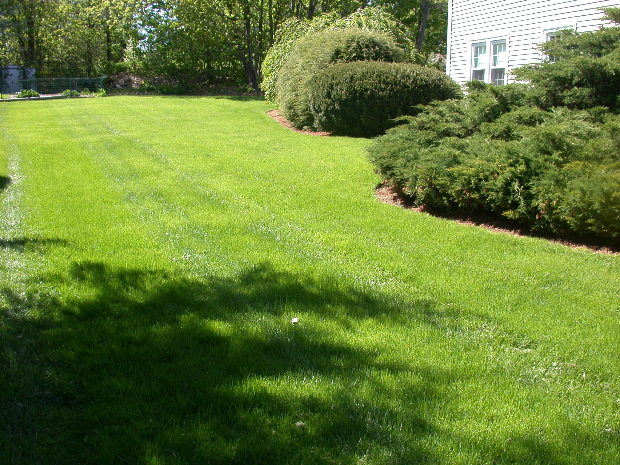 Lawn mowers blog archive lawn care maintenance service for Garden care maintenance