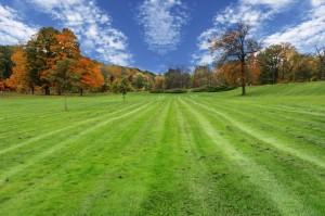 Organic Lawn Care Service