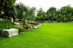 Avoid Bagging Grass Clippings