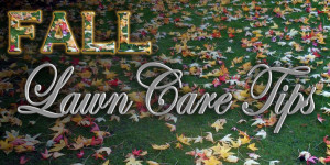 Fall Lawn Care steps
