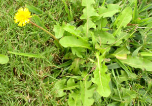 Removing Noxious Weeds