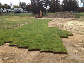 Laying sod in the cold weather not outrageous
